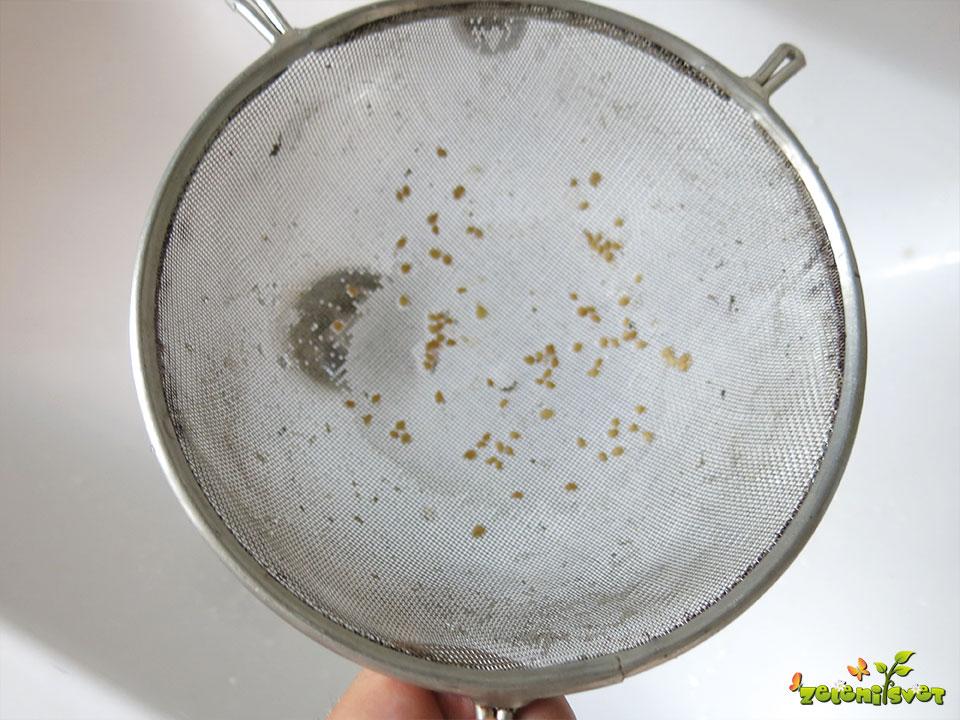 seme paradižnika po izpiranju
