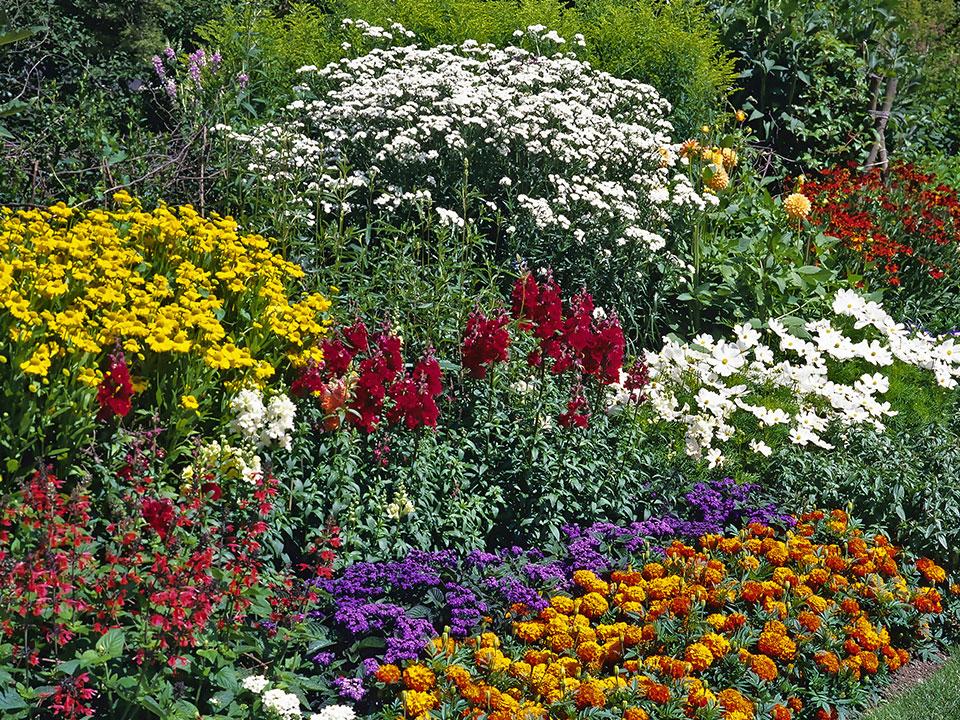 Cvetlična podeželjska zasaditev