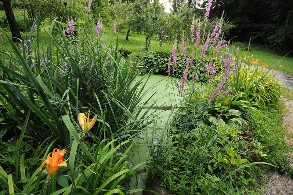 Vrtna mlaka, sonaravni prostor za rastline in živali