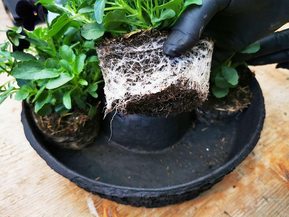 odstranjevanje korenin