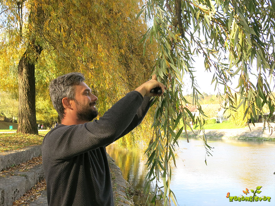 nabiranje vej vrbe