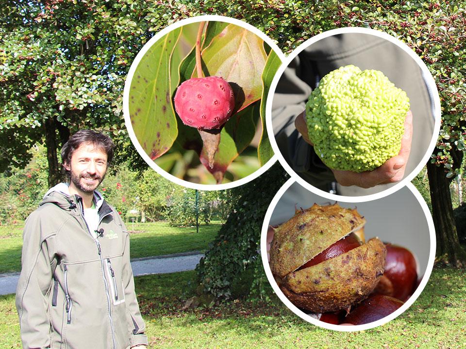 Jesenska drevnina v užitnih in okrasnih plodovih