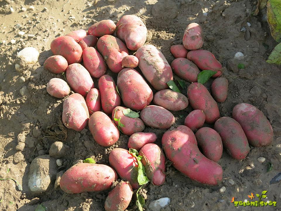 krompir esmee