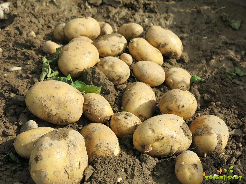 krompir gatsby