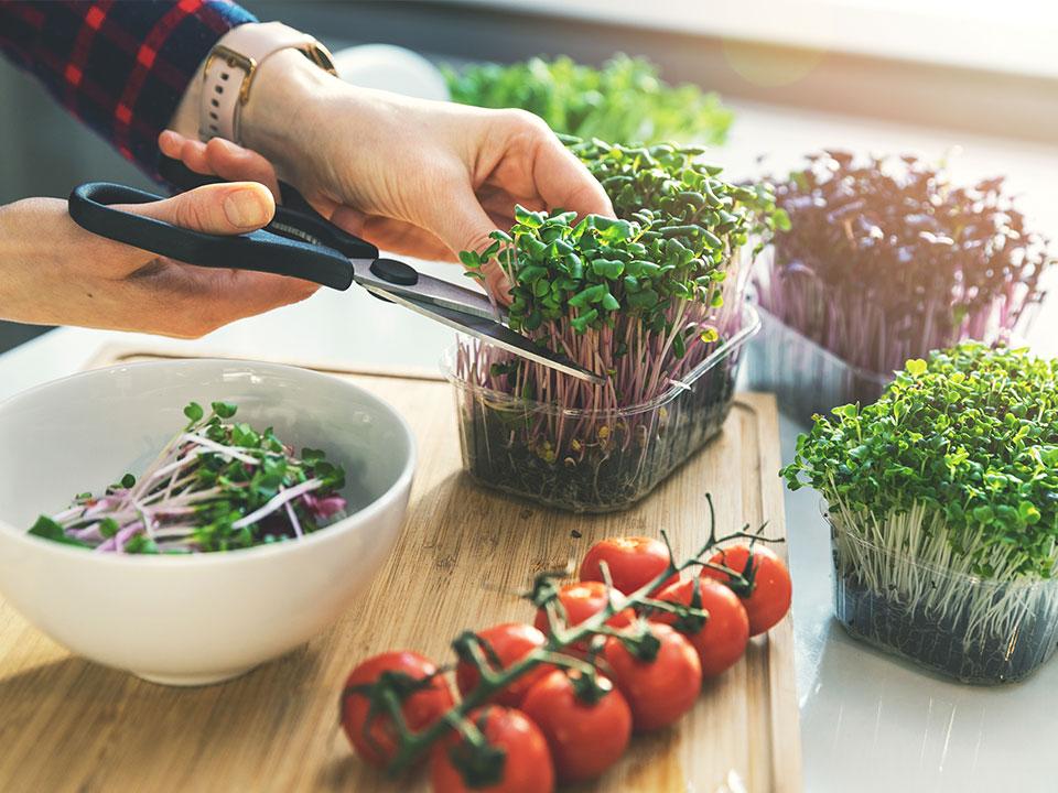 Mikro zelenjava, setev, seme, uporaba, zalivanje, pobiranje