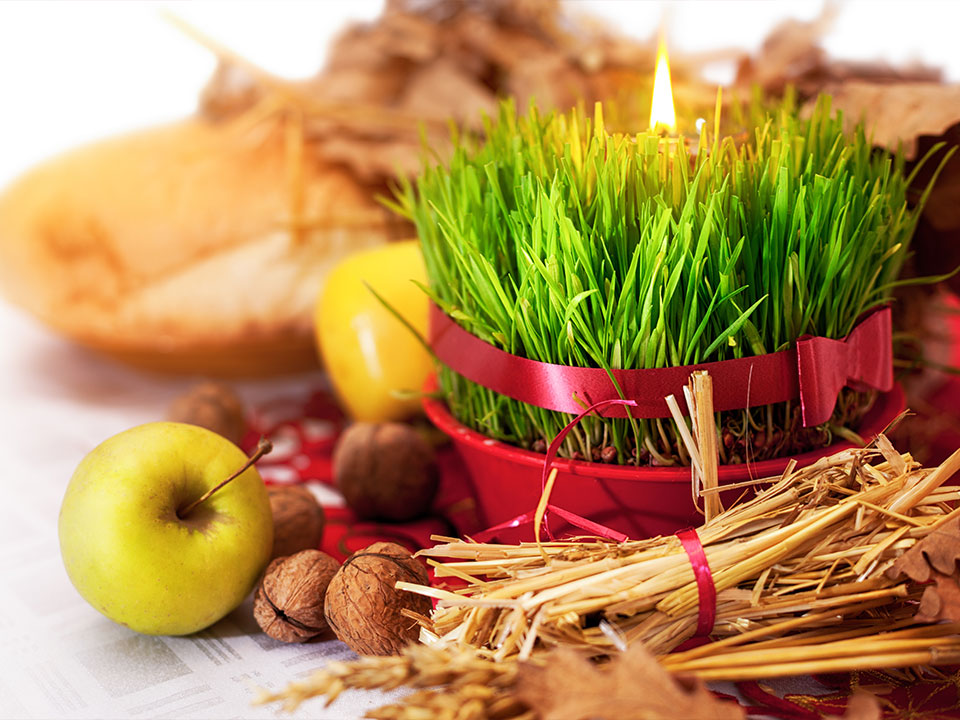 Božično žito v mahu, postopek setve in ideja za praznično dekoracijo