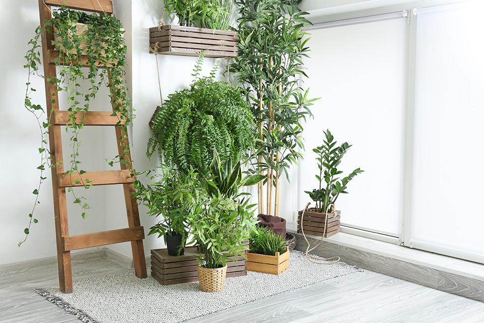 zelene rastline za čist zrak