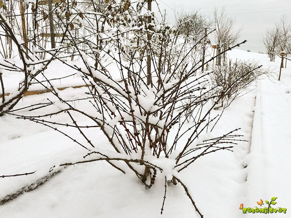 moker sneg