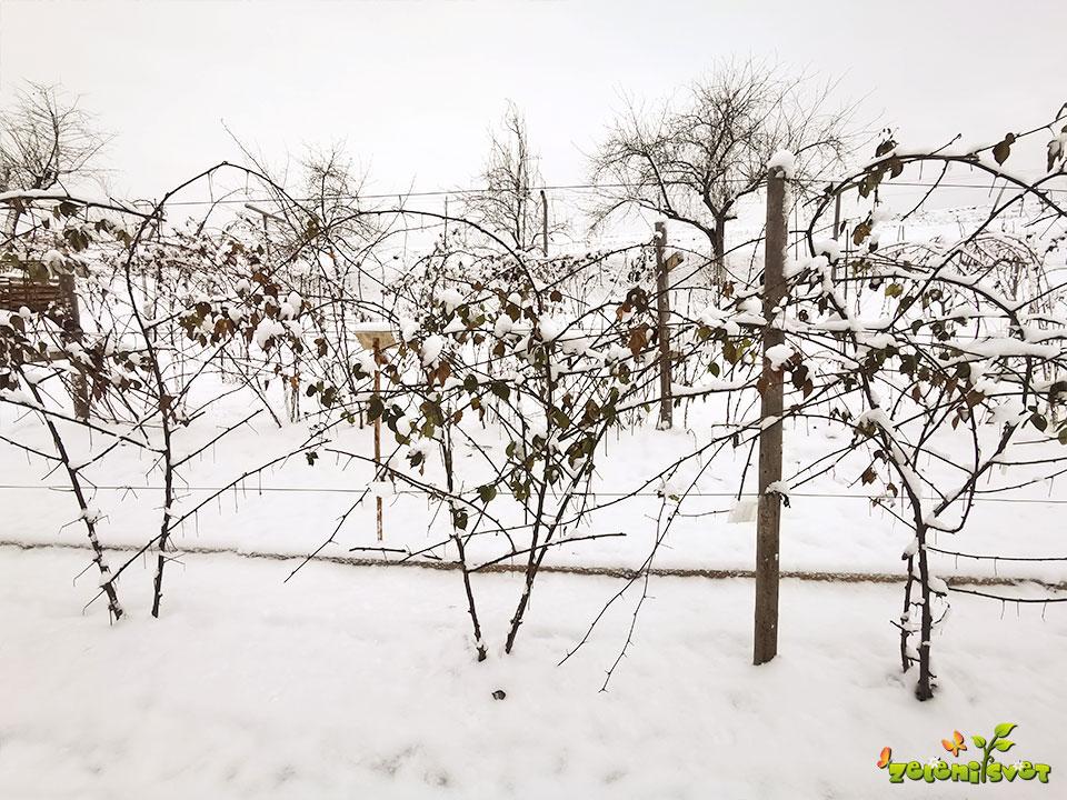 robide ob opori v snegu