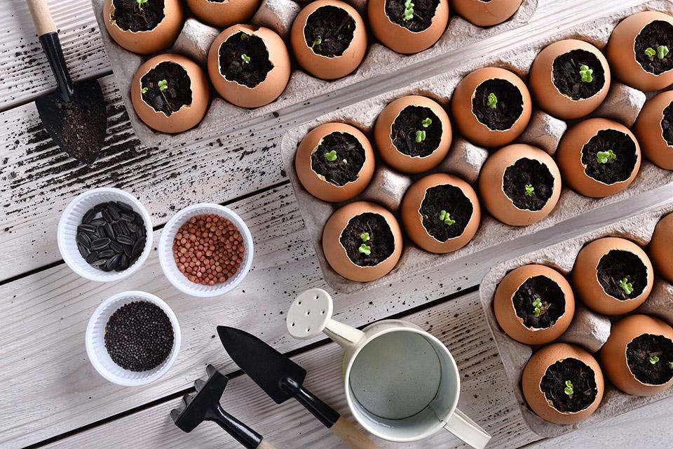 Setev za domače sadike opravimo v jajčne lupine in ostale organske materiale