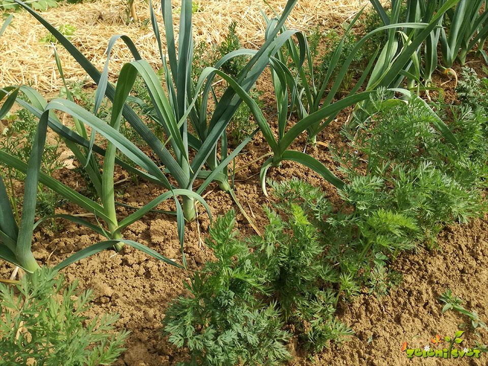 Dvoleten, trileten in petleten kolobar na domačem vrtu
