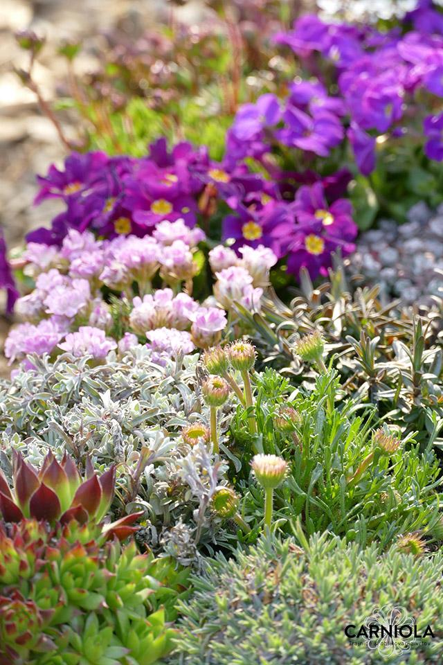 zasaditev cvetlic
