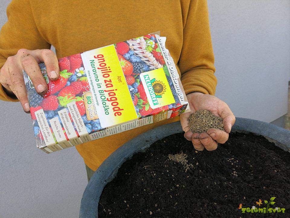 organsko gnojilo za jagode