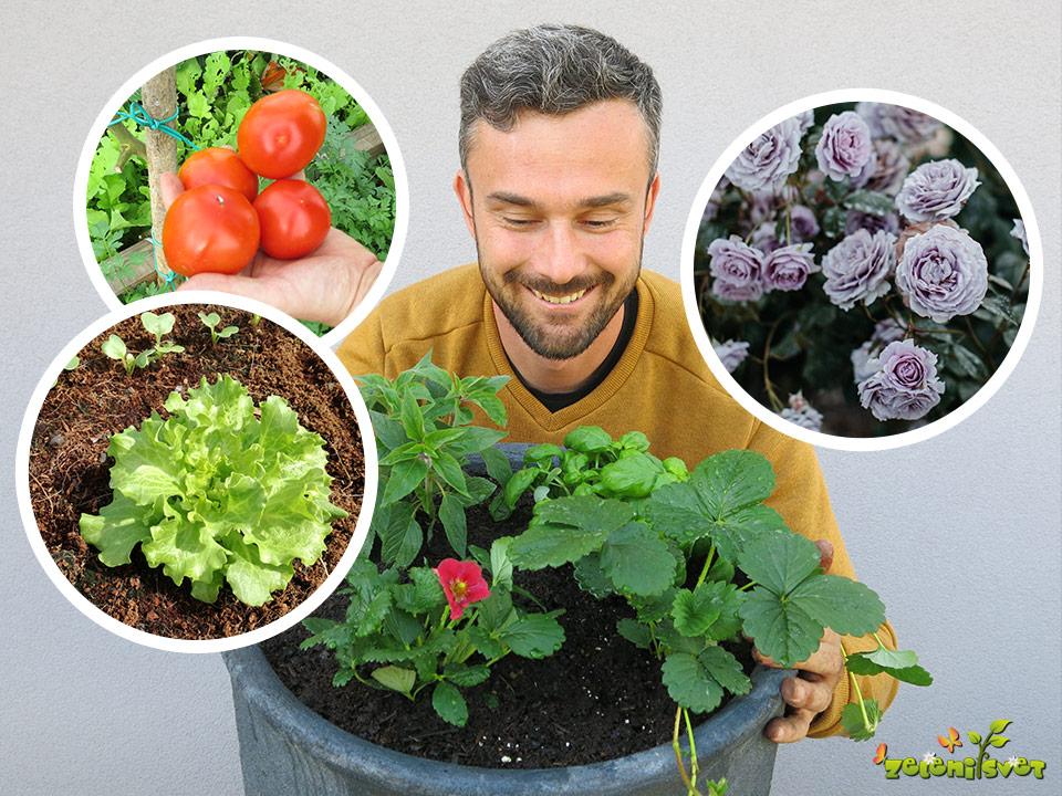 Skrb za jagode, paradižnik, solato, vrtnice in mikorizne glive, ki pomagajo rastlinam