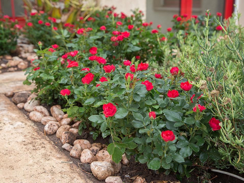 Vrtnica `Zepeti` posajena ob obrobi gredice