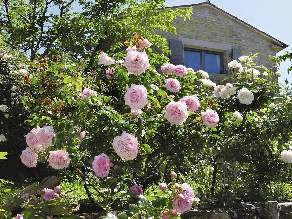 vrtnica prešern