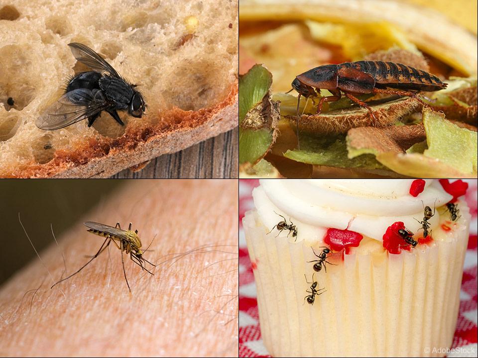 Kako ustavimo muhe, komarje, posteljne pršice, ščurke, bolhe, sobne hrošče in mravlje?