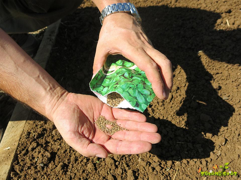 Kaj sejemo in sadimo v septembru in priprava gredice na vrtu?