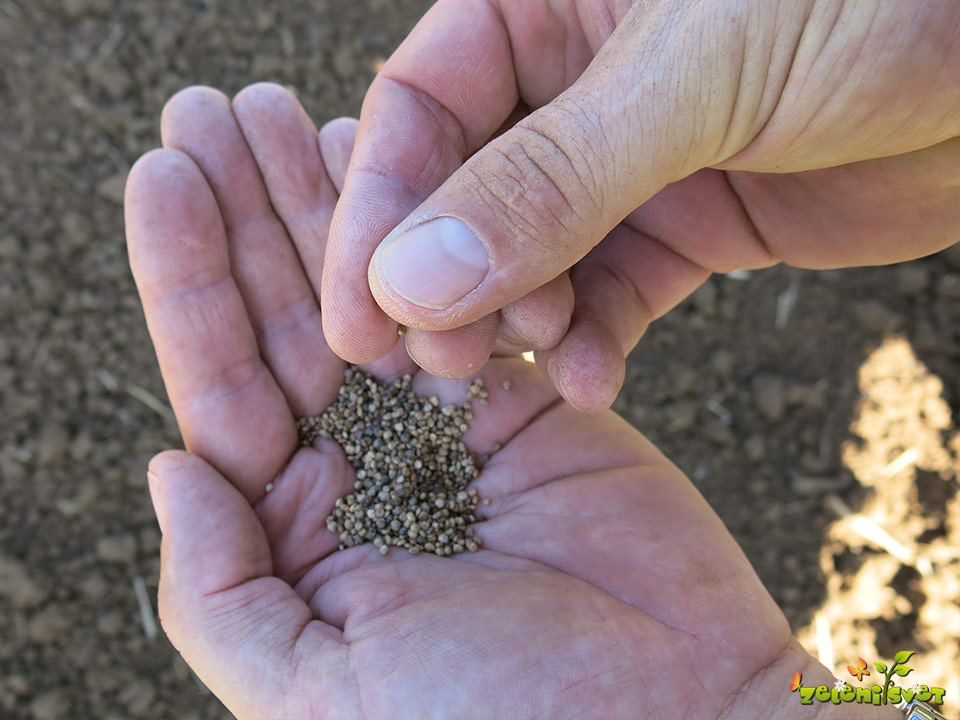 seme motovilca