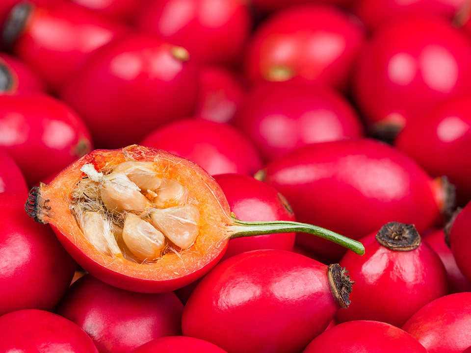 šipek plod, sadež