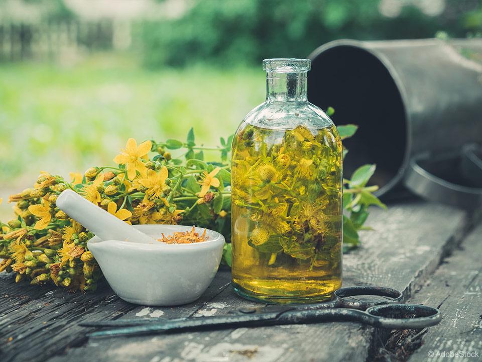 Šentjanževka na vrtu in recept za zdravilno šentjanževo olje
