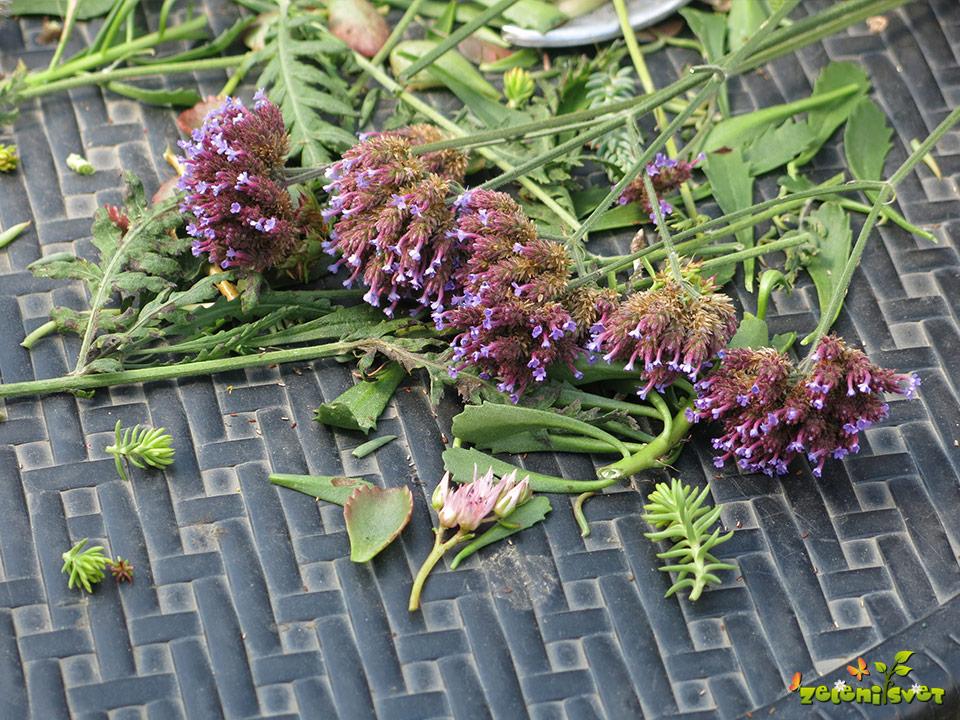 uporabno cvetje